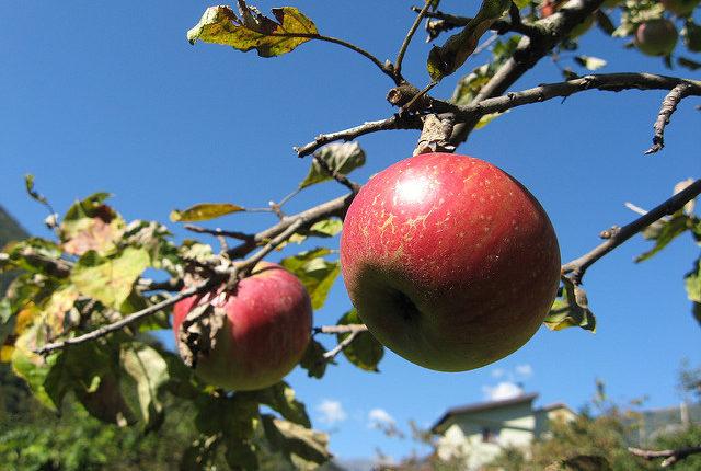 農業の種類【果樹】根気強さといぶし銀で果物をブランド化