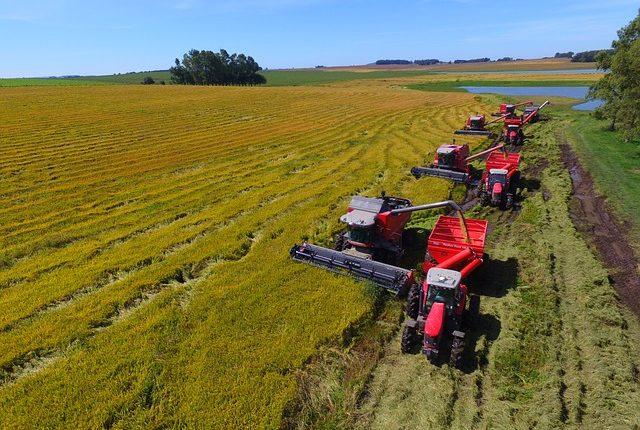 農業の種類【稲作】農家のシックスセンスが発揮される